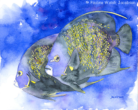 Angel Fish (watercolor)